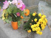 Bepflanzung_11_2015_17
