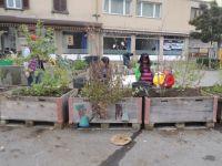 Bepflanzung_11_2015_19