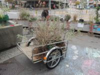 Bepflanzung_11_2015_20
