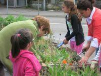 Projekt_Wunderkiste_Vorplatzbepflanzung_24